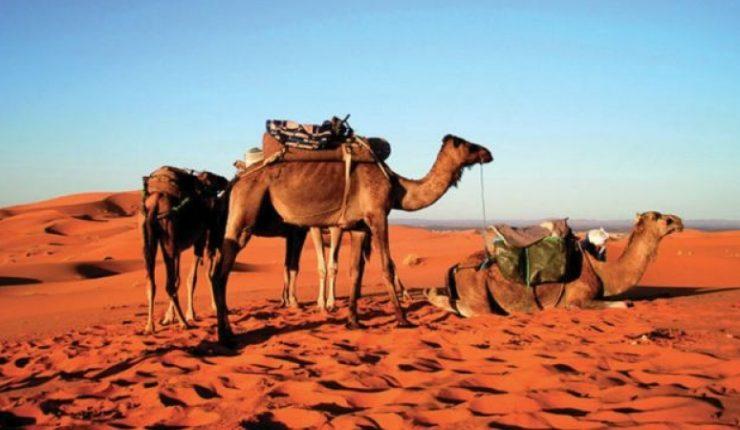 În vizită în Africa de Nord, – MAROC